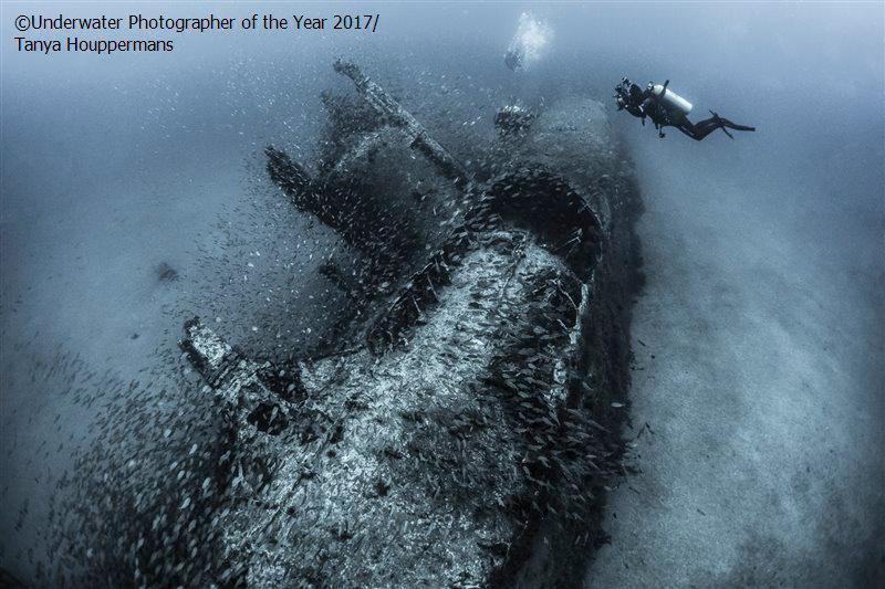 2017 winning images underwater photographer of the year publicscrutiny Images